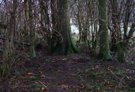 Rookery woods